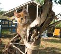 im kittensgarden